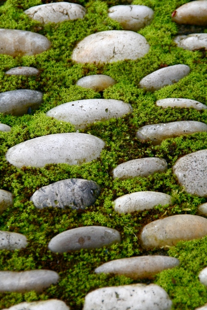 Paver stones surely gather moss
