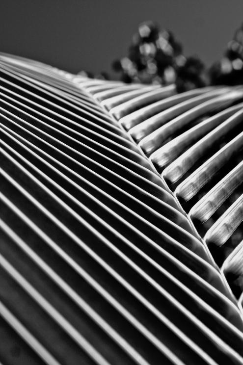 palm frond symmetry