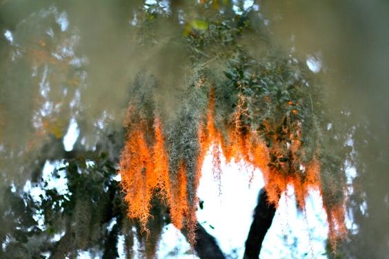 Sunset moss